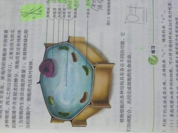 动植物细胞的异同点_求初一人教版生物课本上植物细胞和动物细胞的图片_百度知道