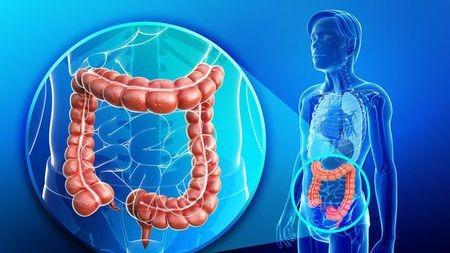 人的消化道里到底有多少活的微生物?可以按斤算!的头图