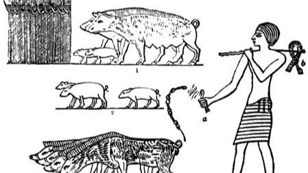 犹太人和穆斯林为什么不吃猪肉?