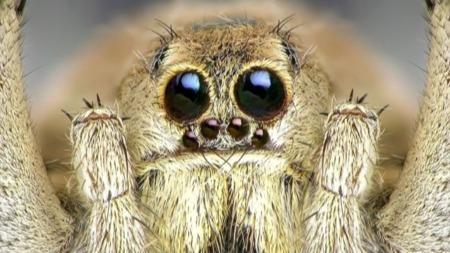 """虽然没有翅膀,但蜘蛛能靠地球电场""""飞航""""的头图"""