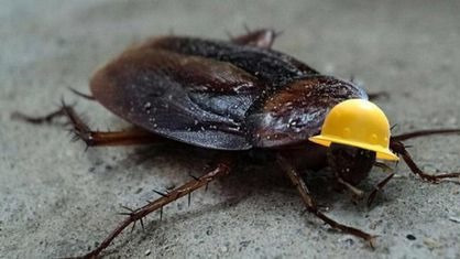 讨厌蟑螂吗?让它们全部消失会怎么样呢?