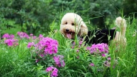 宠物身上总是臭臭的……到底是什么原因呢?