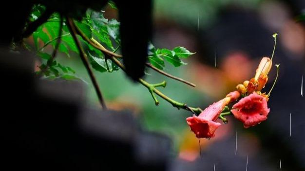 夏初暴雨哪家强 冷涡暴雨或不敌梅雨攻势退场?