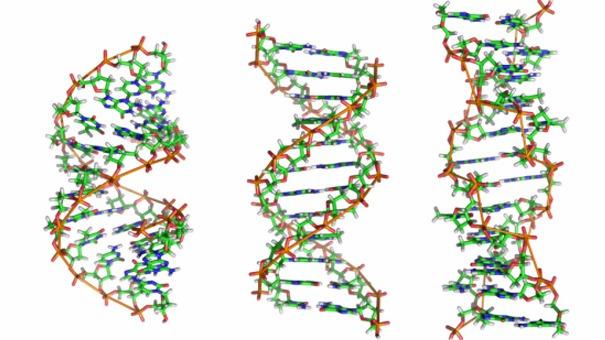 中国每年为什么会新增2600万个有害基因突变?