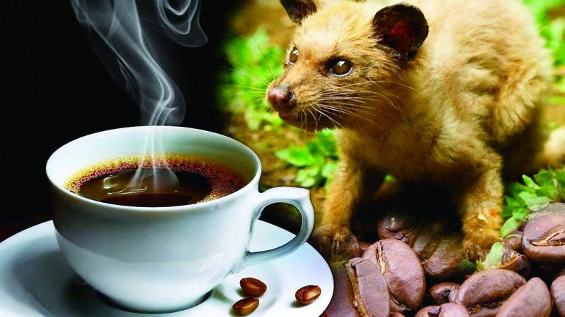 为什么有些动物爱吃便便?的头图