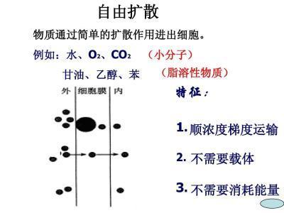 脂20的减脂原理是什么意思_内脂豆腐是什么意思