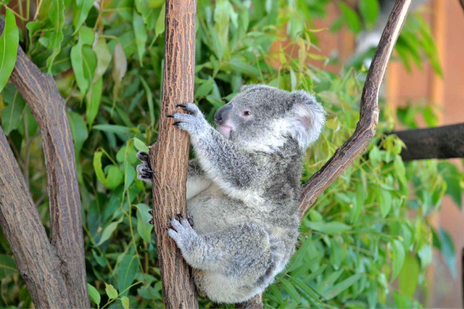 澳大利亚旅游攻略图片54