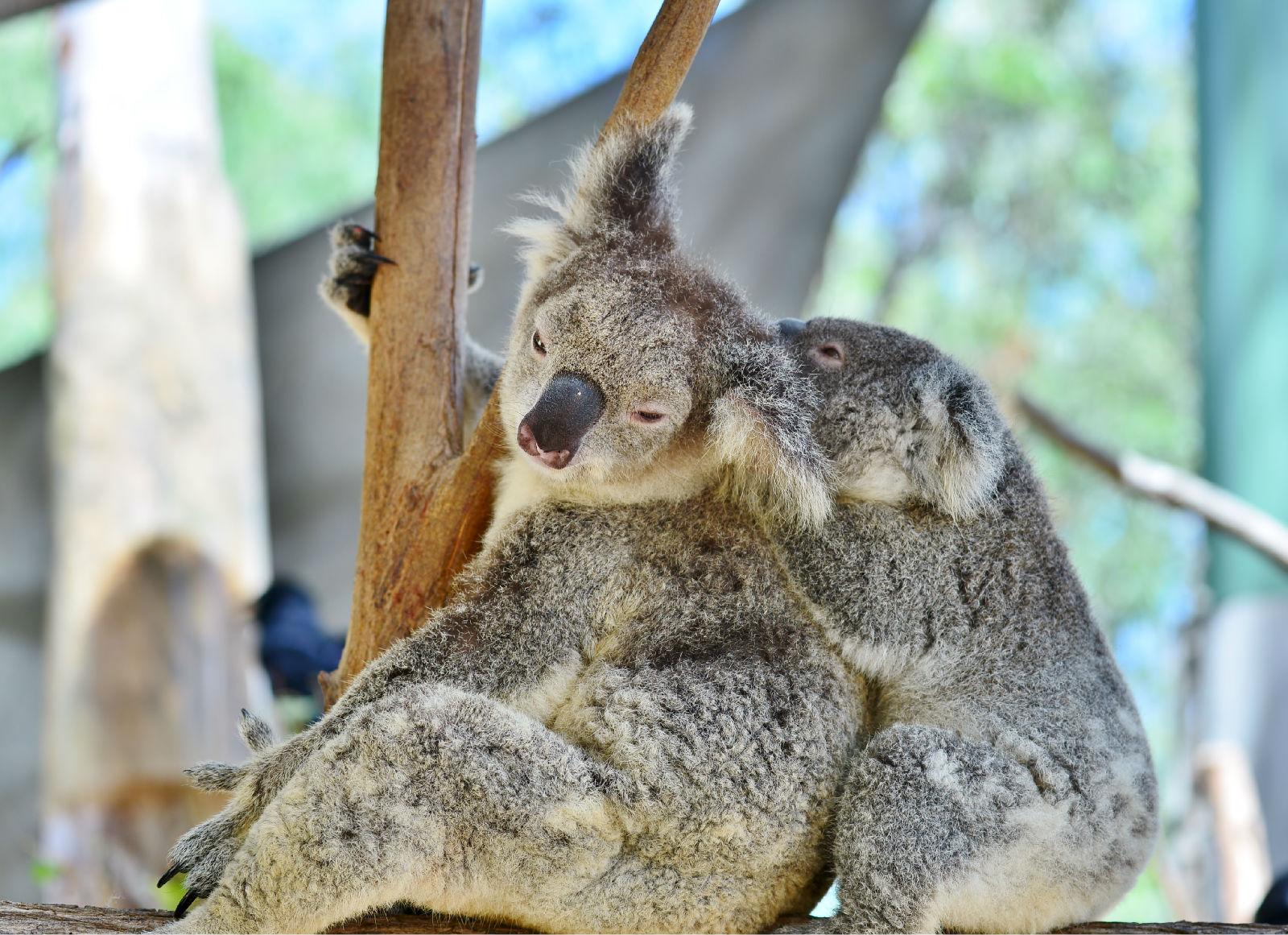 澳大利亚旅游攻略图片2