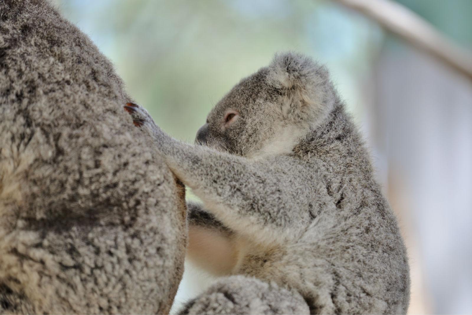 澳大利亚旅游攻略图片38