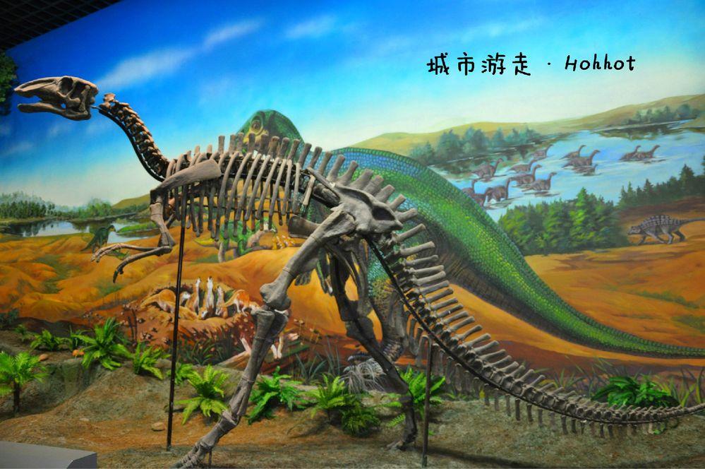 内蒙古博物院之旅~_旅行画册旅行图片_百度旅游