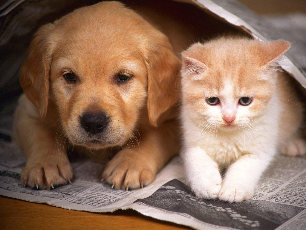 狗图片_找一张猫和狗的图片_百度知道
