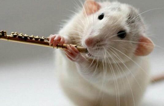 属鼠人哪年结婚好