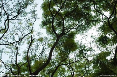 什么的树木_中国最贵的树木是什么树_百度知道