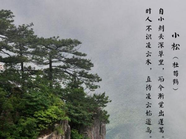 梅花树的诗句