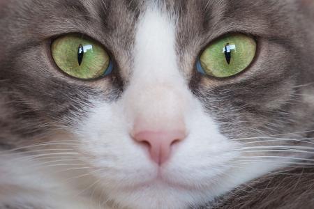 吃死猫的眼睛_猫的眼睛会一日三变又是什么原因呢?_百度知道
