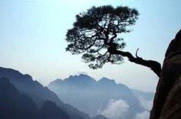 ()宾客()观赏()黄山