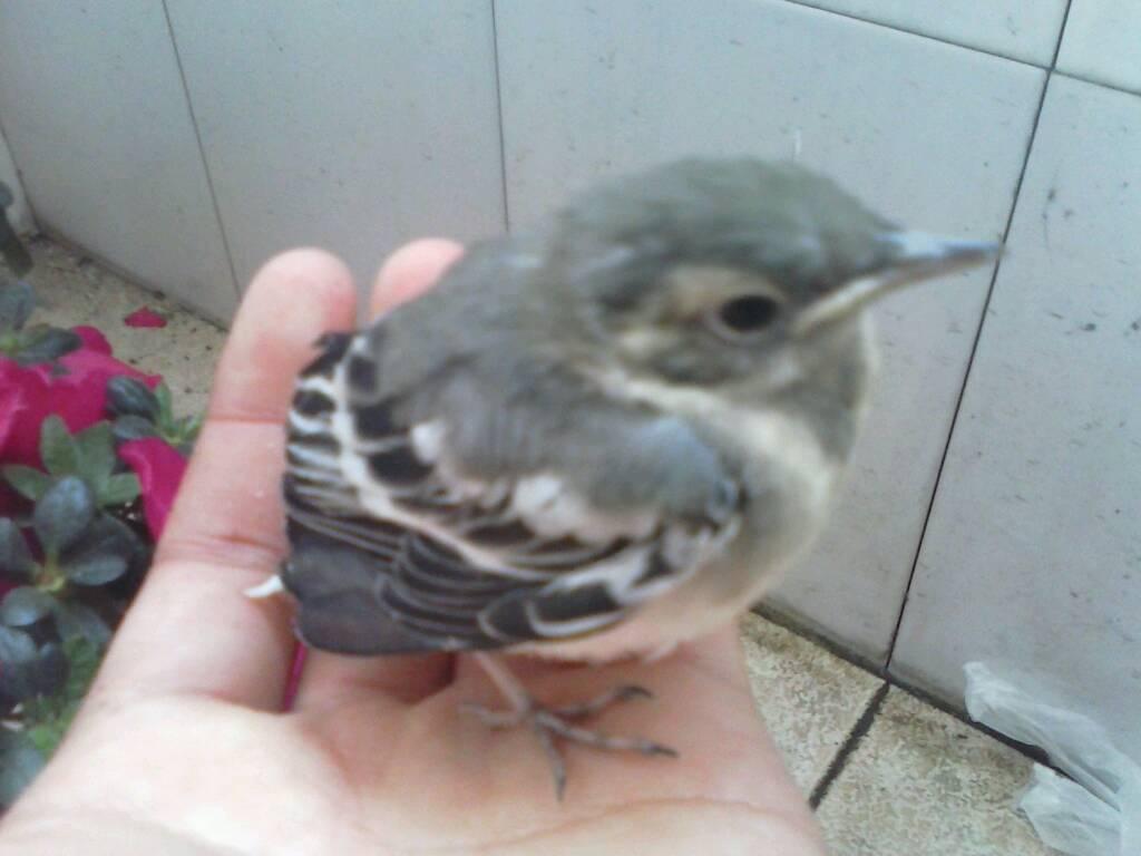 梦见两只鸟缠在一起 梦见两只鸟飞进我家