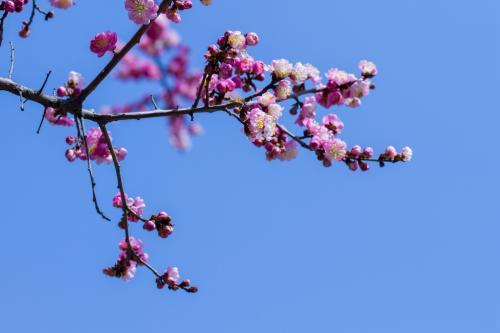 阳春三月是什么意思阳春三月是什么意思