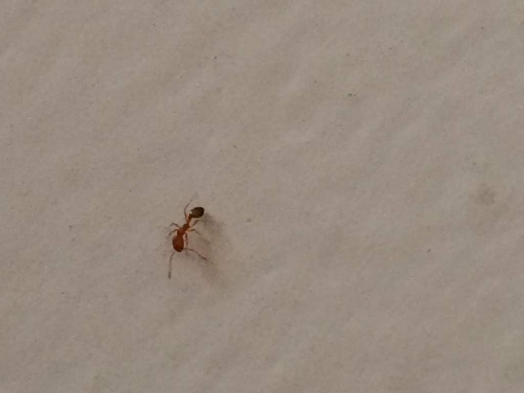 蚂蚁磁力怎么进不去了 磁力猫