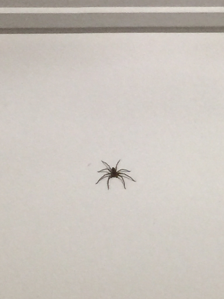 梦见一只很大的蜘蛛 梦见一只特别大的黑蜘蛛