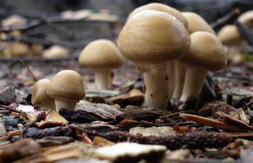 蘑菇的种类_常见蘑菇种类及图片?_百度知道