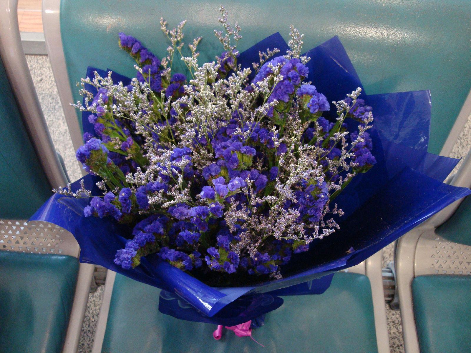 满天星花的花�_表达友谊的花及图片_百度知道