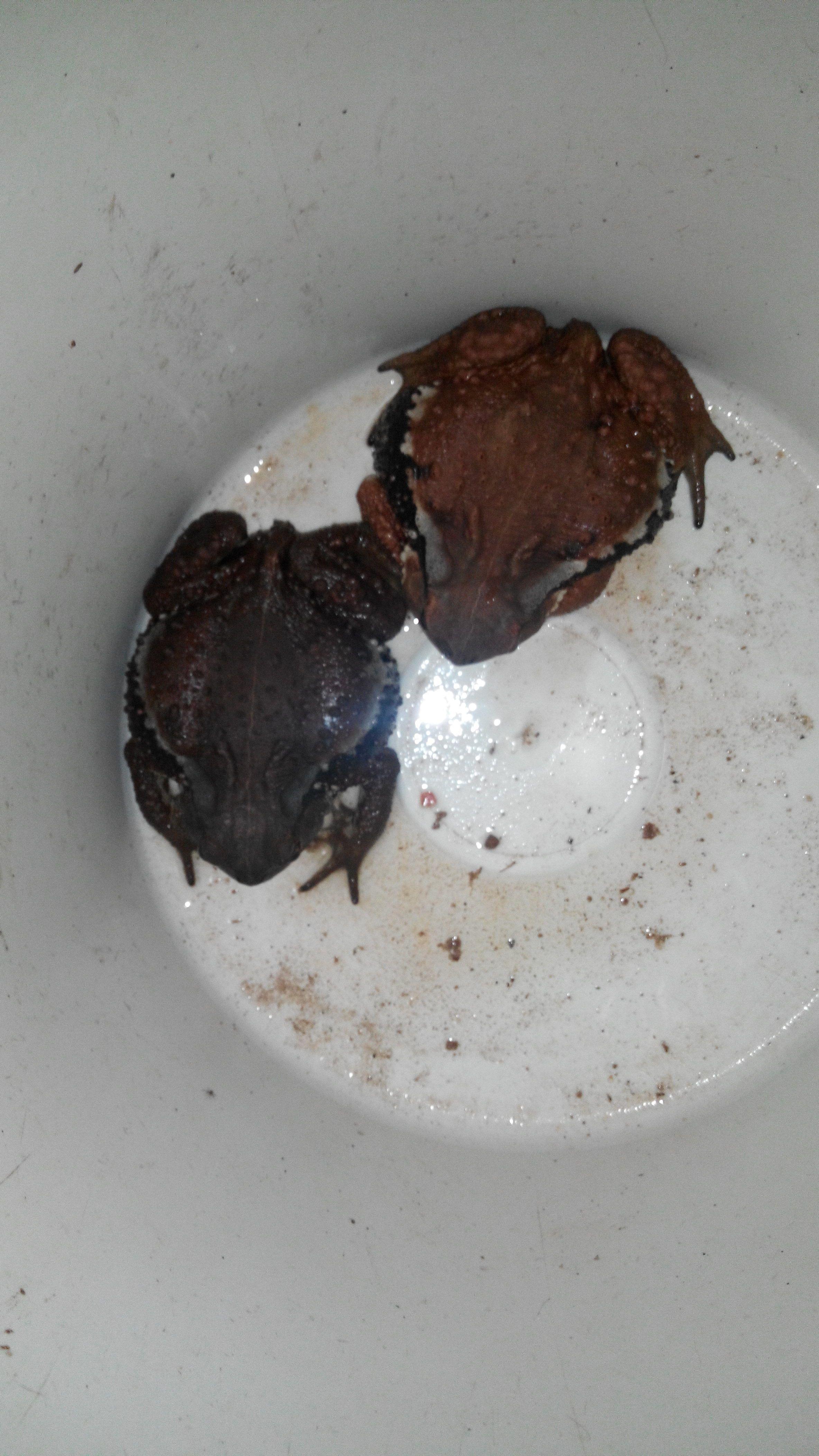 什么蛙水成语_水蛙