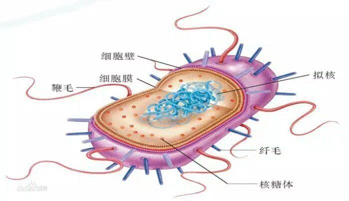 原核生物没有细胞核吗