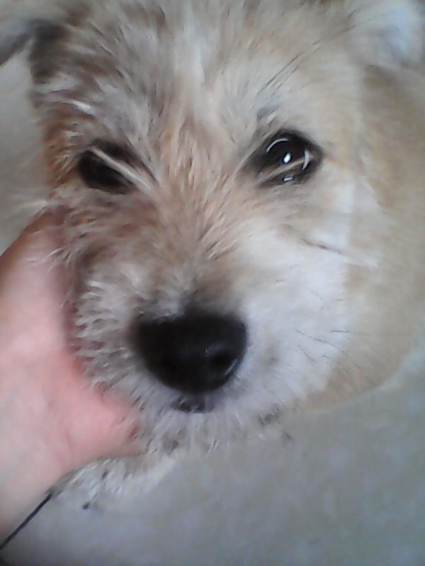 长脸狗_小狗才2个月大,脸的两边都有毛遮住,头上还长出来一些。这是 ...