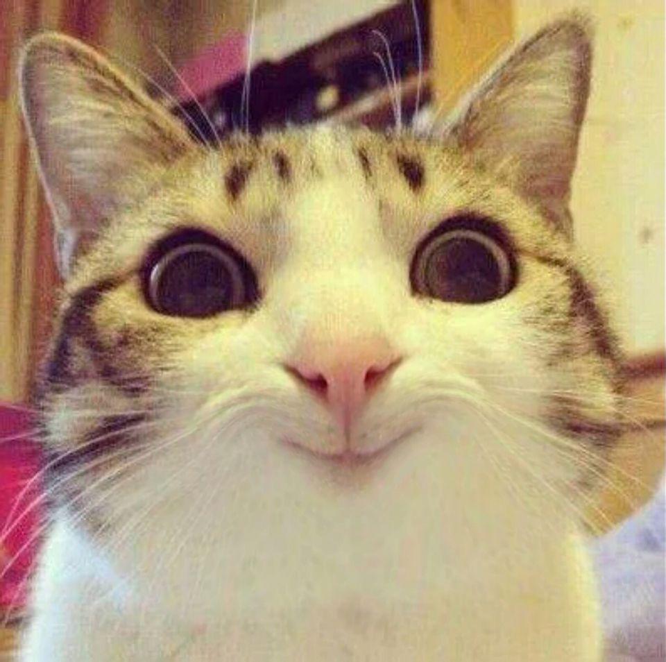 求幫忙一件事,幫我p張圖,把這個貓臉p成笑臉,我滿意100懸賞值全拿走圖片