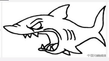 海底動物的簡筆畫圖片圖片