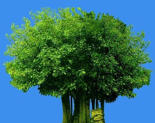 什么的树木_种什么树最值钱?_百度知道