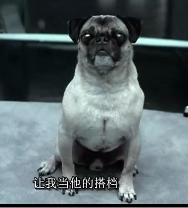 女人与狗欢爱_黑衣人中的那只狗是什么品种?
