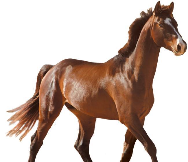马的图片大全