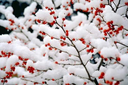 寒风冬雪的诗