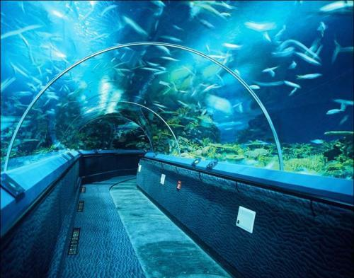 长风公园水族馆门票_上海长风海洋世界和上海海洋水族馆有什么区别_百度知道