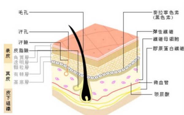 包皮的原理_二、什么状况的包皮应该割?