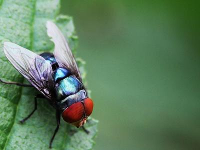 灭苍蝇最有效的方法有哪些?