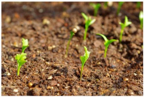 【丰乐种业000713】丰乐种业的待遇和发展前途?