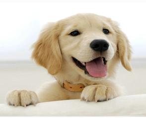 白色的狗狗取什么名字好?