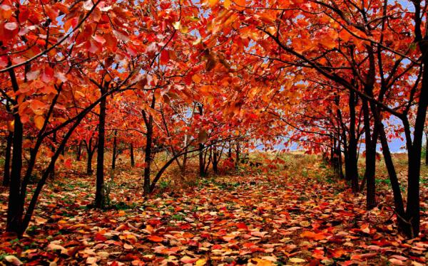 立秋图片诗词 关于描写立秋的古诗词有哪些