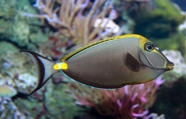 这是什么鱼呀?应该是热带的求教名称