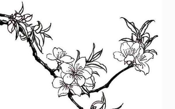 画桃花的简笔画的步骤是什么