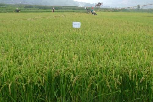 如何评价农业部长称农村将成为稀缺资源