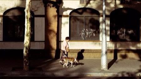 """救狗6年,她卖了34?#36861;浚?#20320;的选择,不是""""绑架""""我的理由"""