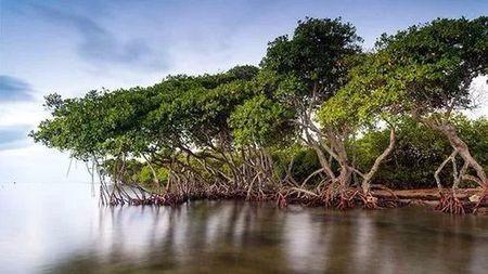 说好去看红树林,远望一抹绿?这是怎么回事?