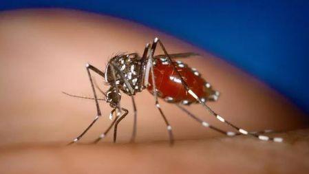 几年前科学家在广州每周?#22836;?00万只蚊子,现在怎么样了?