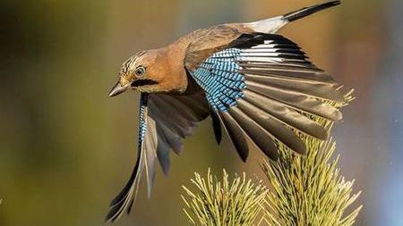 天气辣么冷,鸟儿怎么安然过冬?