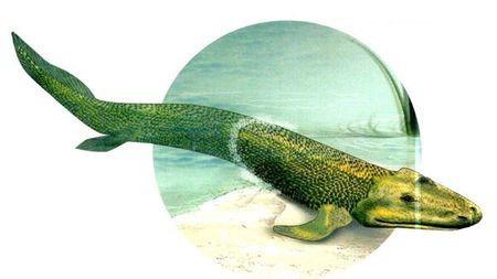 """尋找人體內的""""魚祖先 """""""