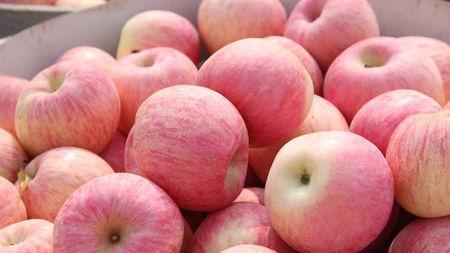 酿酒技术:苹果酒的酿酒流程步骤